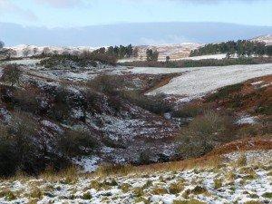 Трава припорошена снегом: то, что надо