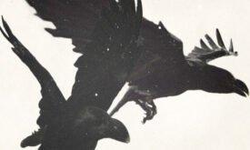dark_wings5