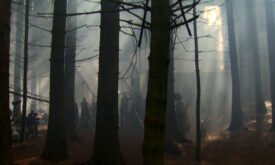 съемки в лесах (Северная Ирландия)