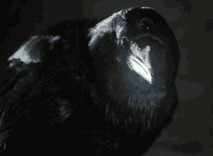 Даже трехглазая ворона не сможет предсказать нам, чем все кончится.
