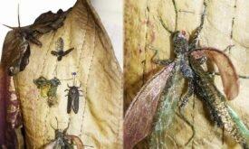 Квартийские жуки