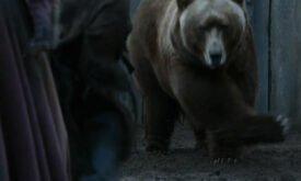 Медведь отакуэ