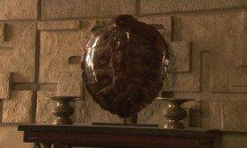 Черепаховый панцирь?