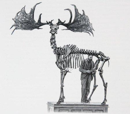 Скелет оленя Megaloceros giganteus и человек (автор рисунка неизвестен)