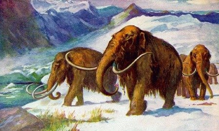 Ошибочные представления о мамонтах, Палеонтологический музей им. Ю. А. Орлова.