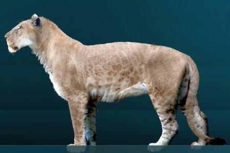 Американский лев (Panthera leo atrox), художник Sergio De la Rosa Martínez