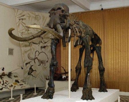 Скелет мамонта (хазарского степного трогонтериевого слона), хранится в Астраханском историко-архитектурном музее-заповеднике.