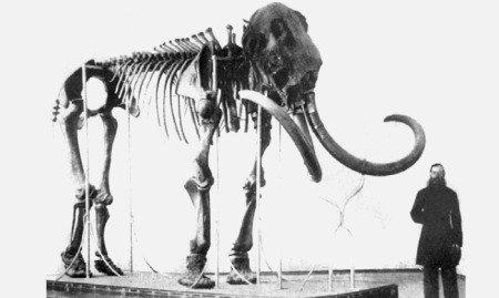 Мамонт Адамса, впервые представлен в 1808 г. в музее антропологии и этнографии им. Петра Великого (Кунсткамера).