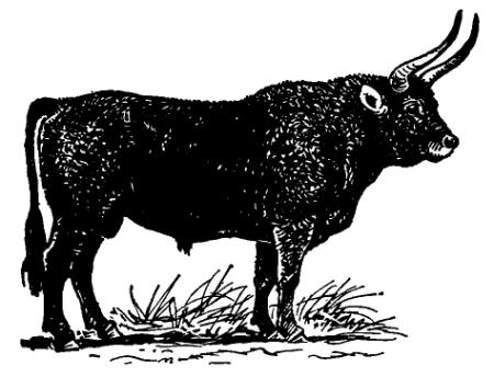 Тур (Bos primigenius), илл. «Жизнь животных: в 6 томах». — М.: Просвещение, 1970 г.