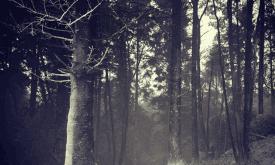 Съемки в Северной Ирландии: лесной парк Толлимор (?)
