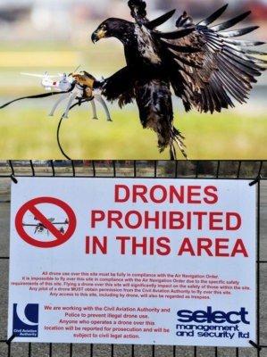 Охота на дронов