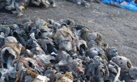 Трупы трупов (скелеты)