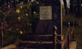 Желтые розы, растущие на могиле Маргери и Оленны Тирелл