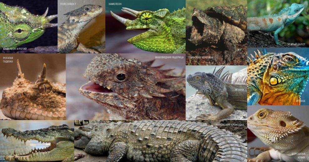 Пример раскрасок и «вооружений» у земных рептилий